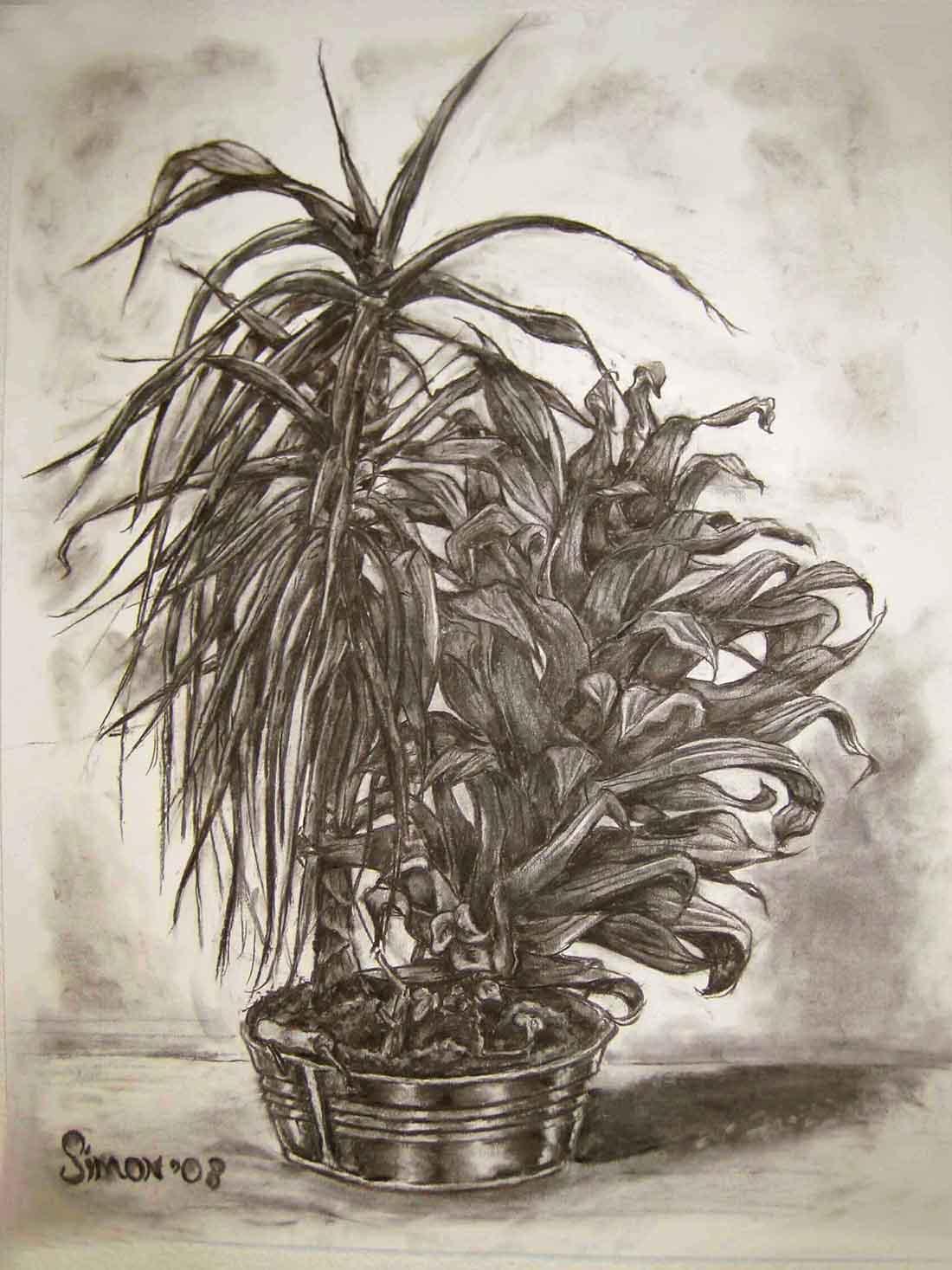 Houtskooltekening plant